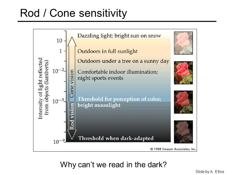 Rod / Cone sensitivity Why can't we read in the dark? Slide by A. Efros