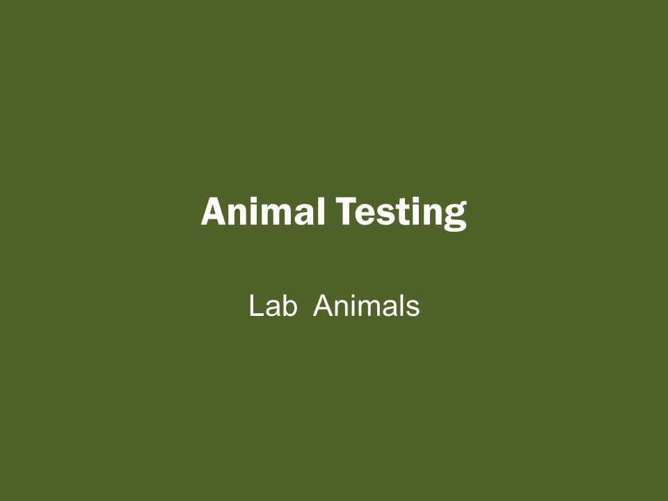 Animal Testing Lab Animals