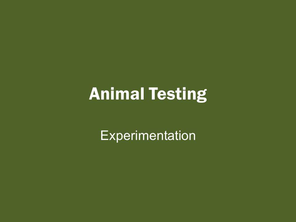 Animal Testing Experimentation