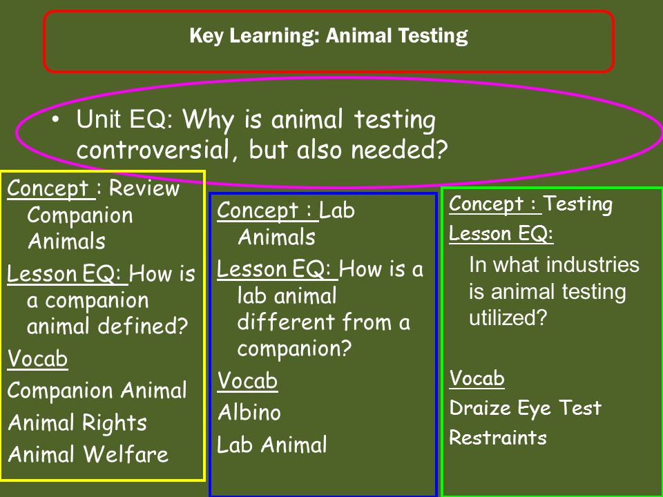 Animal Testing Companion Animal Review