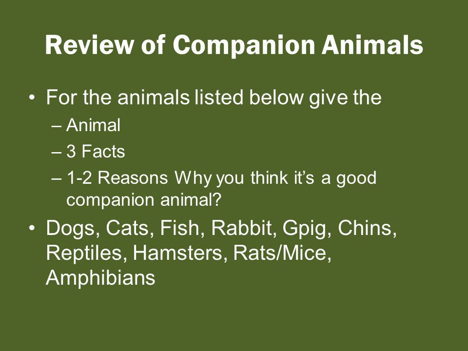 Review of Companion Animals For the animals listed below give the –Animal –3 Facts –1-2 Reasons Why you think it's a good companion animal.