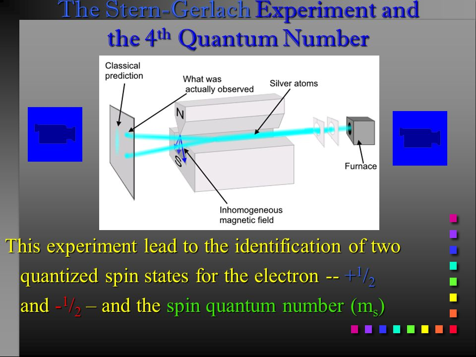 The Stern-Gerlach Experiment and the 4 th Quantum Number This experiment lead to the identification of two quantized spin states for the electron -- + 1 / 2 quantized spin states for the electron -- + 1 / 2 and - 1 / 2 – and the spin quantum number (m s ) and - 1 / 2 – and the spin quantum number (m s )