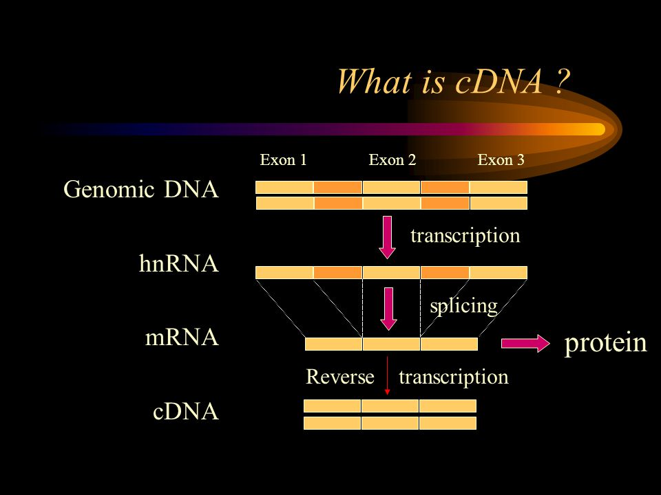 What is cDNA .