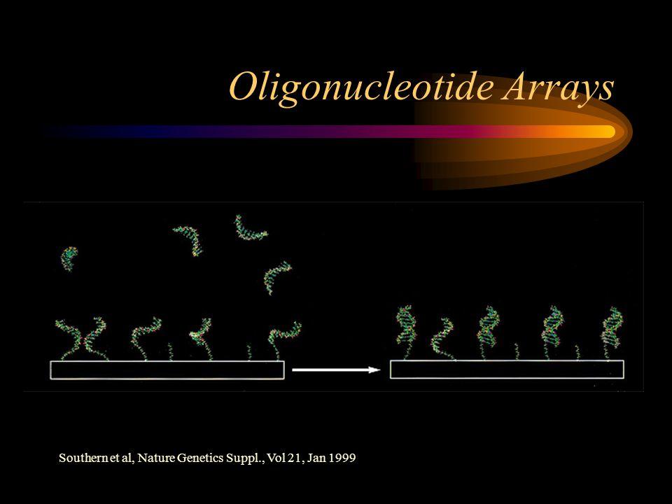 Oligonucleotide Arrays Southern et al, Nature Genetics Suppl., Vol 21, Jan 1999