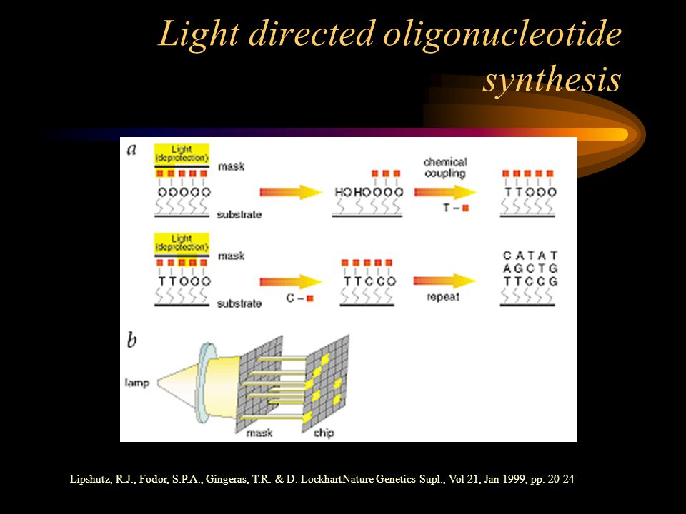 Light directed oligonucleotide synthesis Lipshutz, R.J., Fodor, S.P.A., Gingeras, T.R.