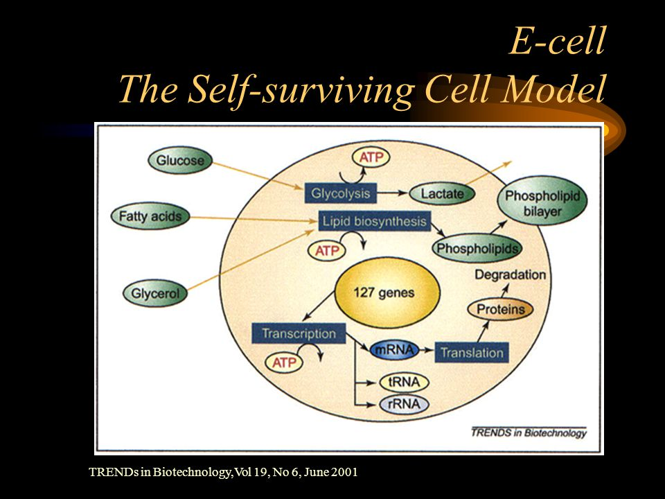 E-cell The Self-surviving Cell Model TRENDs in Biotechnology,Vol 19, No 6, June 2001