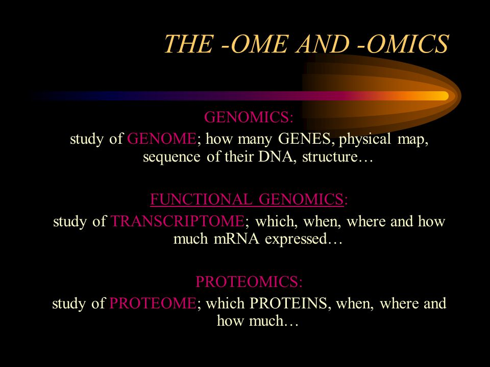 THE -OME AND -OMICS GENOMICS: study of GENOME; how many GENES, physical map, sequence of their DNA, structure… FUNCTIONAL GENOMICS: study of TRANSCRIPTOME; which, when, where and how much mRNA expressed… PROTEOMICS: study of PROTEOME; which PROTEINS, when, where and how much…
