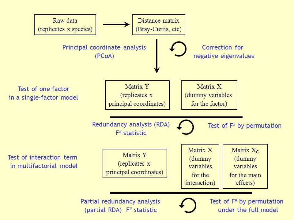 Raw data (replicates x species) Distance matrix (Bray-Curtis, etc) Principal coordinate analysis (PCoA) Correction for negative eigenvalues Matrix Y (