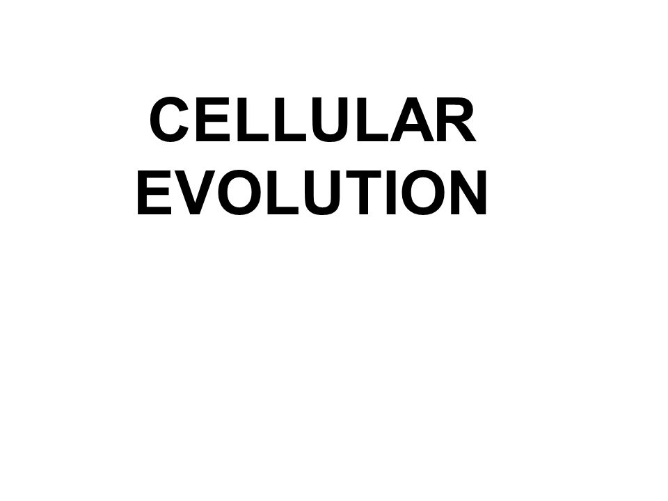 CELLULAR EVOLUTION