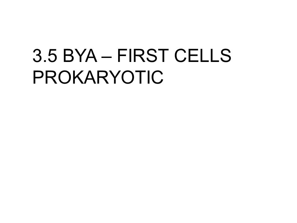 3.5 BYA – FIRST CELLS PROKARYOTIC