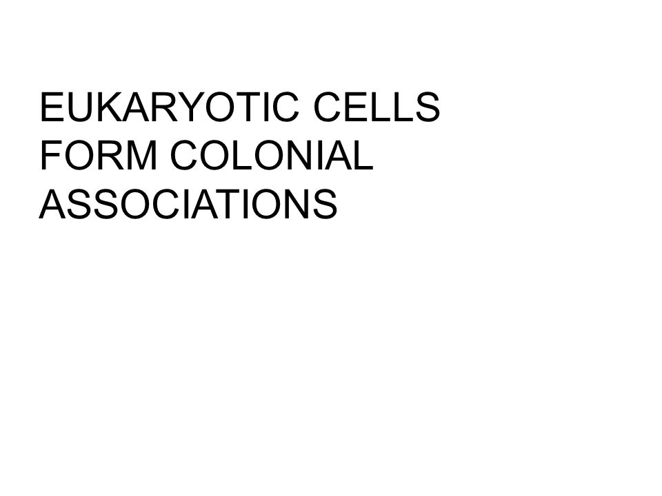 EUKARYOTIC CELLS FORM COLONIAL ASSOCIATIONS