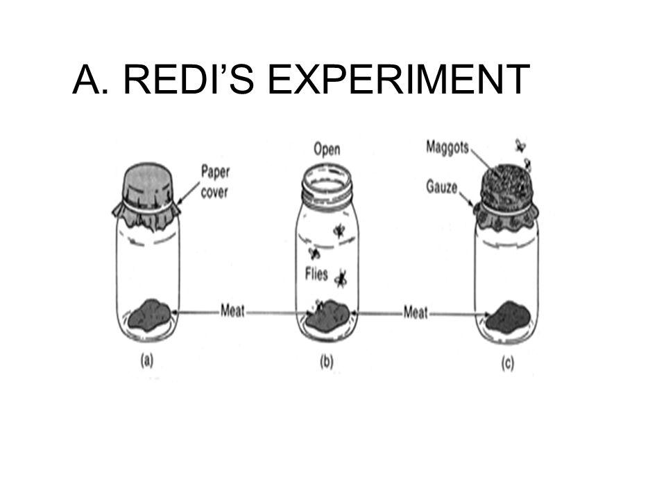 A. REDI'S EXPERIMENT
