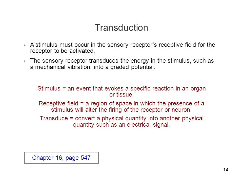 14 Transduction A stimulus must occur in the sensory receptor's receptive field for the receptor to be activated. The sensory receptor transduces the