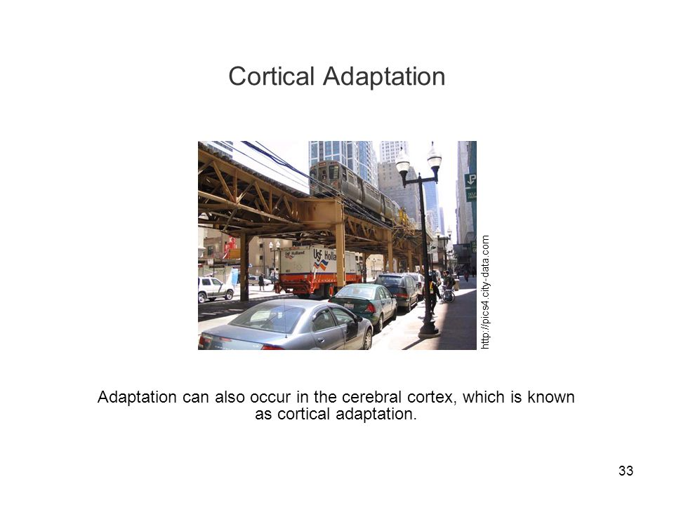 33 Cortical Adaptation http://pics4.city-data.com Adaptation can also occur in the cerebral cortex, which is known as cortical adaptation.