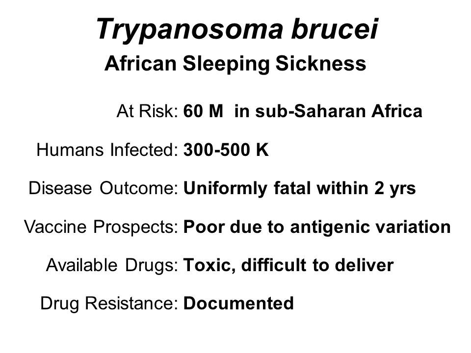Trypanosoma brucei African Sleeping Sickness 60 M in sub-Saharan Africa 300-500 K Uniformly fatal within 2 yrs Poor due to antigenic variation Toxic, difficult to deliver Documented At Risk: Humans Infected: Disease Outcome: Vaccine Prospects: Available Drugs: Drug Resistance: