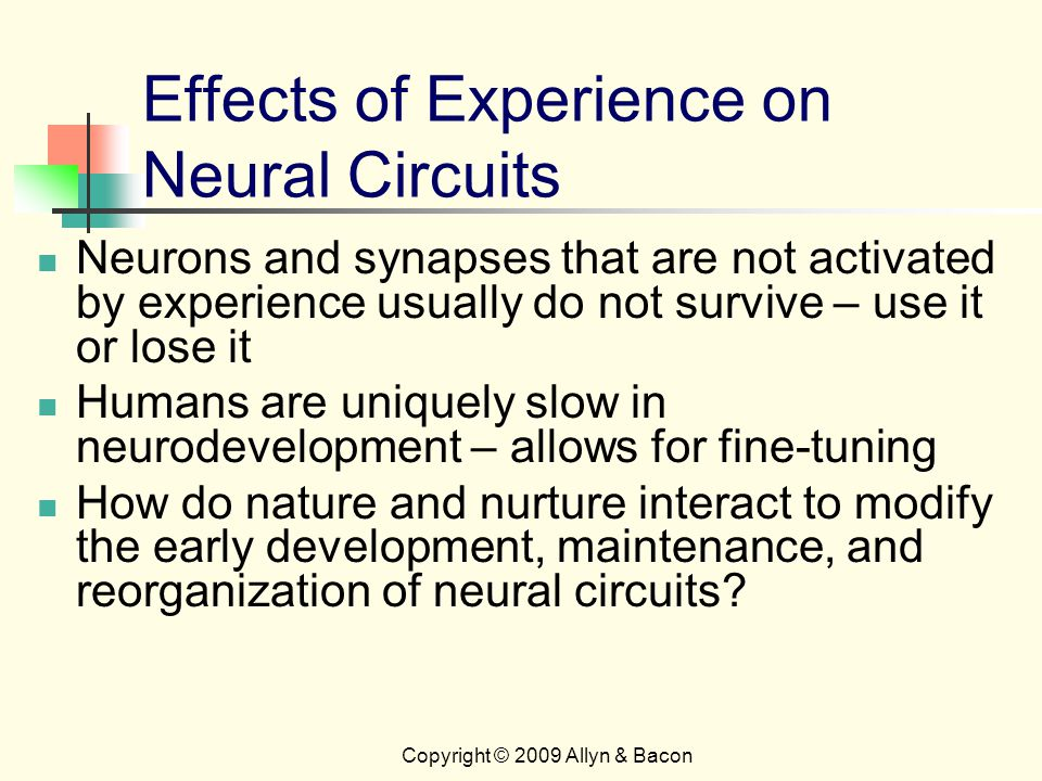 Copyright © 2009 Allyn & Bacon Effects of Experience on Neural Circuits Neurons and synapses that are not activated by experience usually do not survive – use it or lose it Humans are uniquely slow in neurodevelopment – allows for fine-tuning How do nature and nurture interact to modify the early development, maintenance, and reorganization of neural circuits
