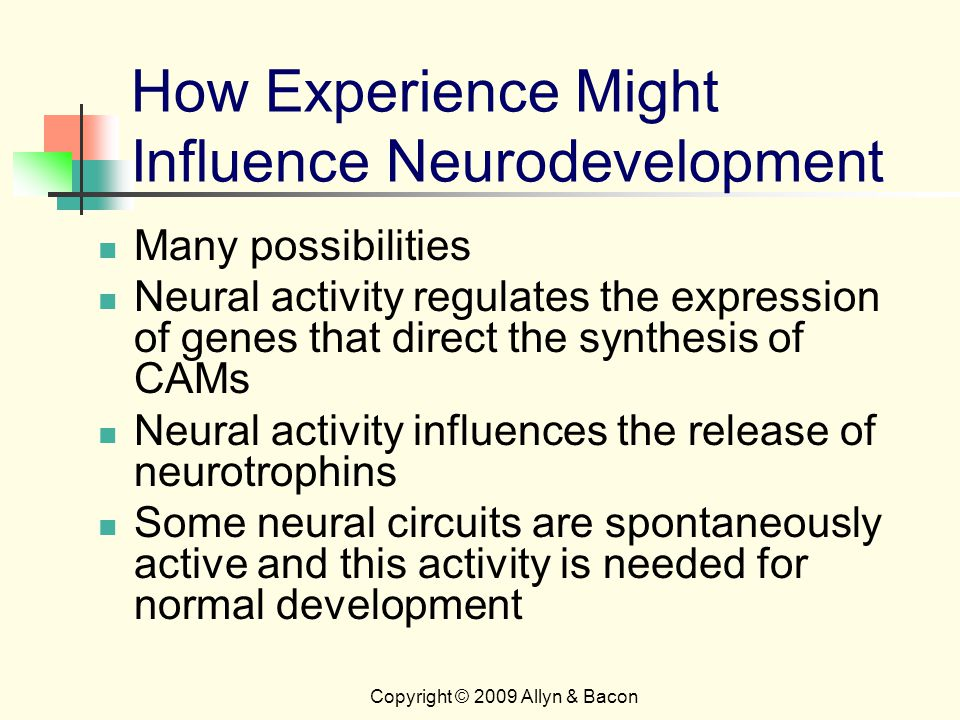 Copyright © 2009 Allyn & Bacon How Experience Might Influence Neurodevelopment Many possibilities Neural activity regulates the expression of genes that direct the synthesis of CAMs Neural activity influences the release of neurotrophins Some neural circuits are spontaneously active and this activity is needed for normal development