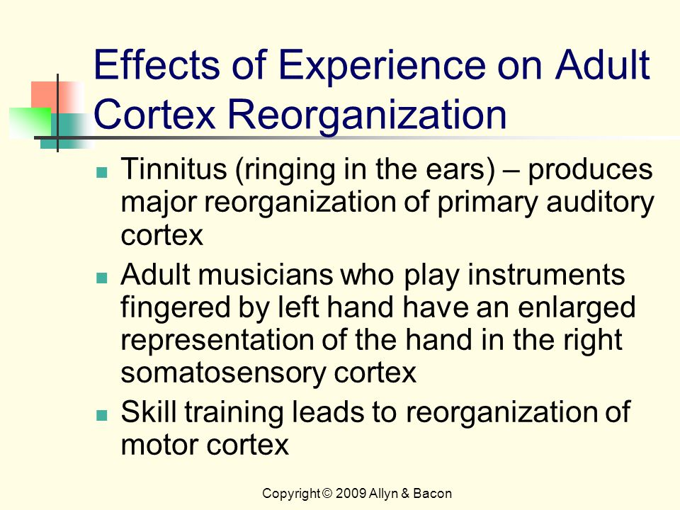 Copyright © 2009 Allyn & Bacon Effects of Experience on Adult Cortex Reorganization Tinnitus (ringing in the ears) – produces major reorganization of primary auditory cortex Adult musicians who play instruments fingered by left hand have an enlarged representation of the hand in the right somatosensory cortex Skill training leads to reorganization of motor cortex
