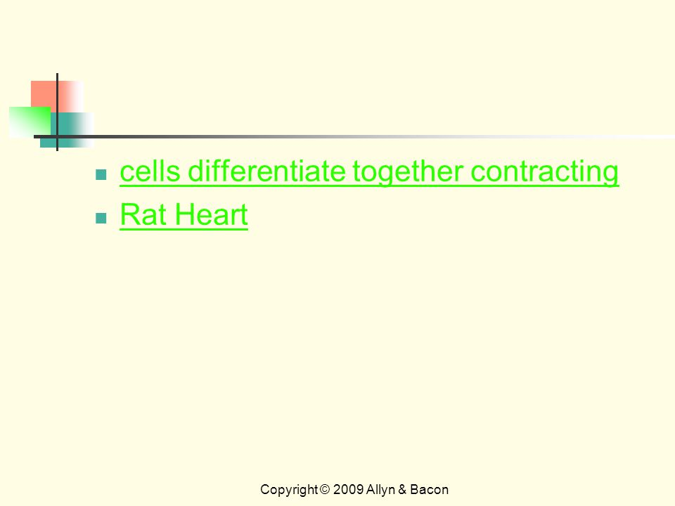 Copyright © 2009 Allyn & Bacon cells differentiate together contracting Rat Heart
