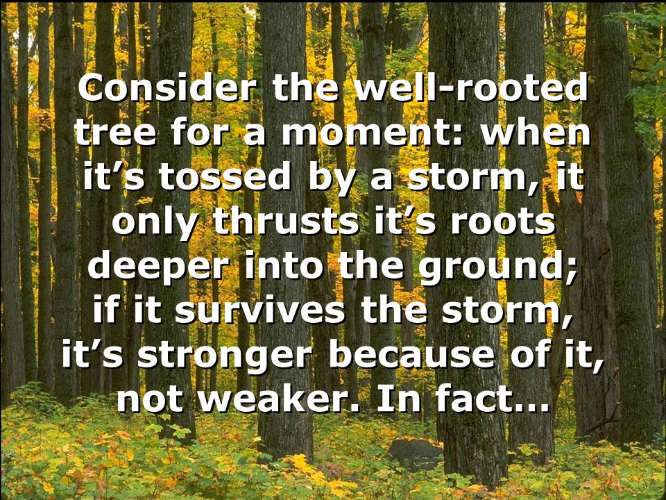 Consider the well-rooted tree for a moment: when it's tossed by a storm, it only thrusts it's roots deeper into the ground; if it survives the storm, it's stronger because of it, not weaker.