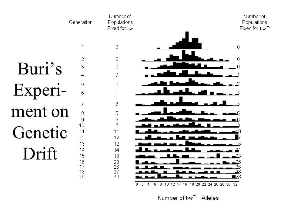 Buri's Experi- ment on Genetic Drift