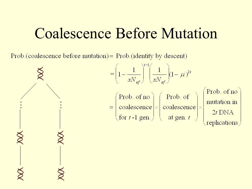 Coalescence Before Mutation ……