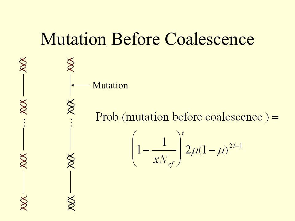 Mutation Before Coalescence …… Mutation