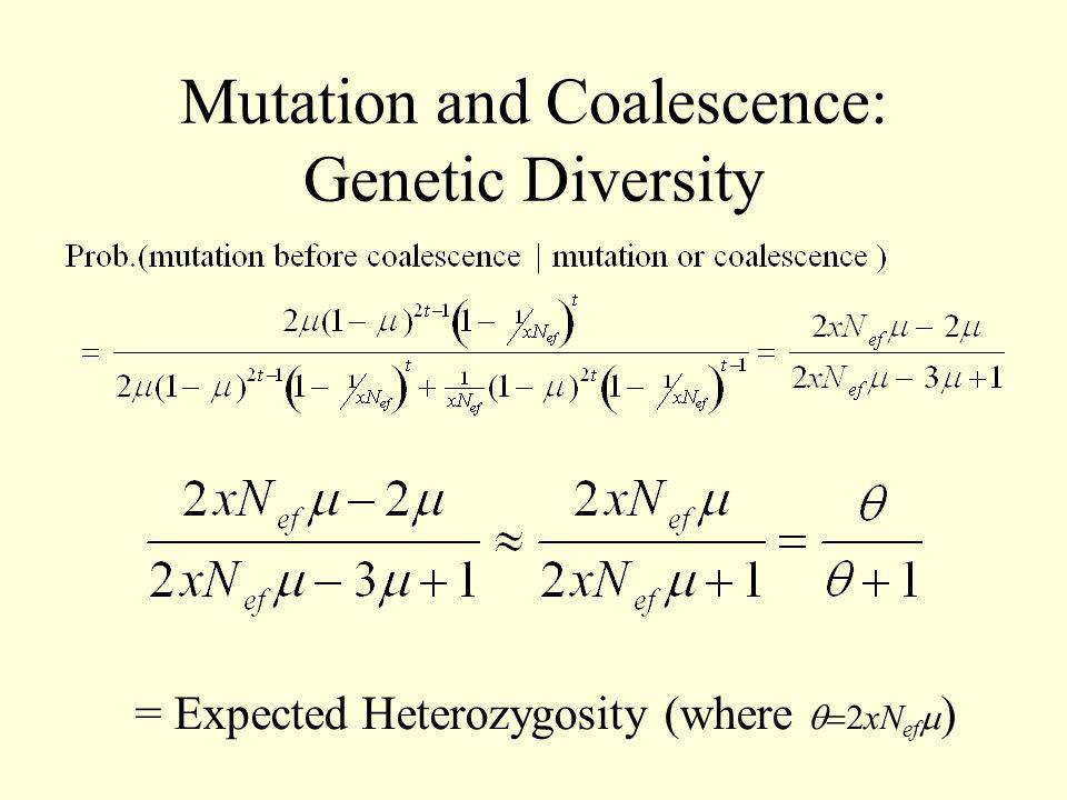 Mutation and Coalescence: Genetic Diversity = Expected Heterozygosity (where  xN ef  )