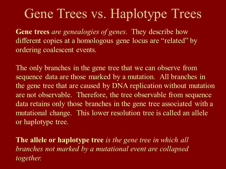 Gene Trees vs.Haplotype Trees Gene trees are genealogies of genes.
