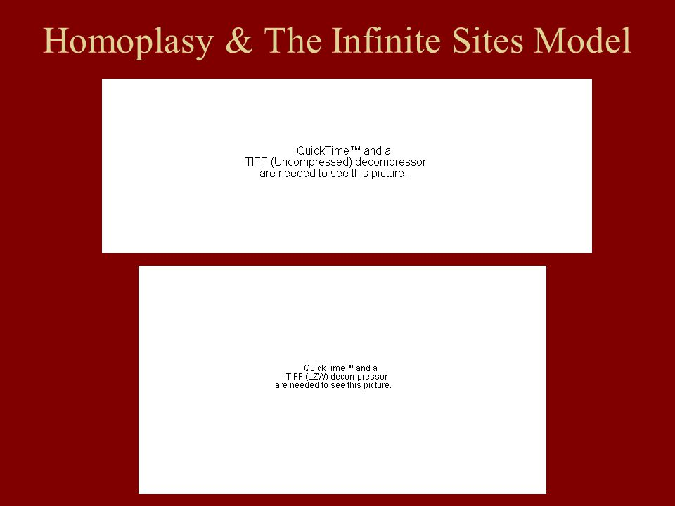 Homoplasy & The Infinite Sites Model