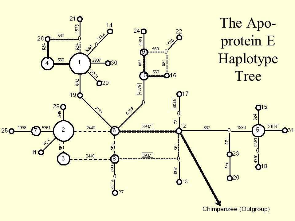 The Apo- protein E Haplotype Tree