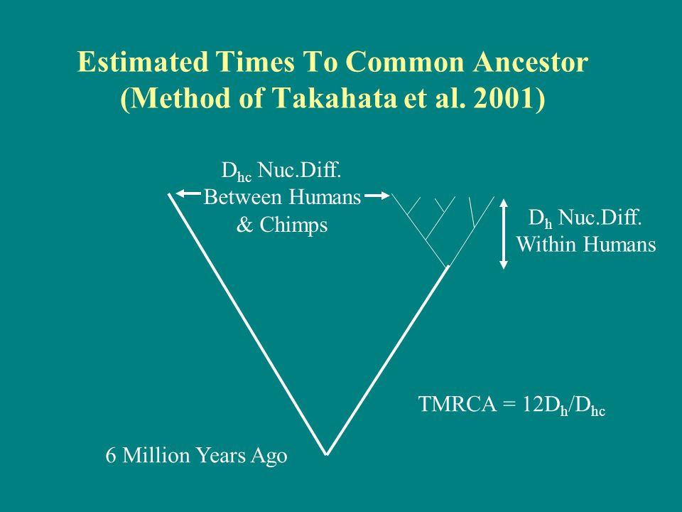 Estimated Times To Common Ancestor (Method of Takahata et al.