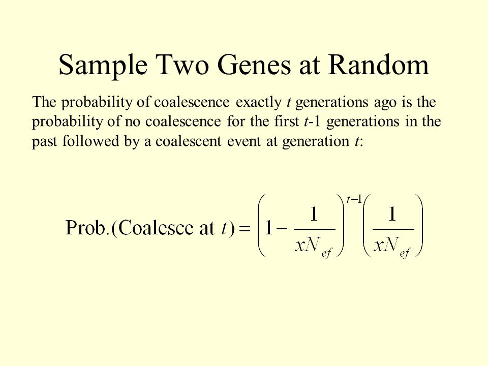 Sample Two Genes at Random The probability of coalescence exactly t generations ago is the probability of no coalescence for the first t-1 generations in the past followed by a coalescent event at generation t: