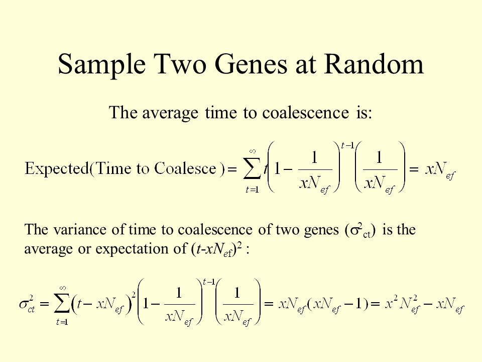 Sample Two Genes at Random The average time to coalescence is: The variance of time to coalescence of two genes (   ct ) is the average or expectati