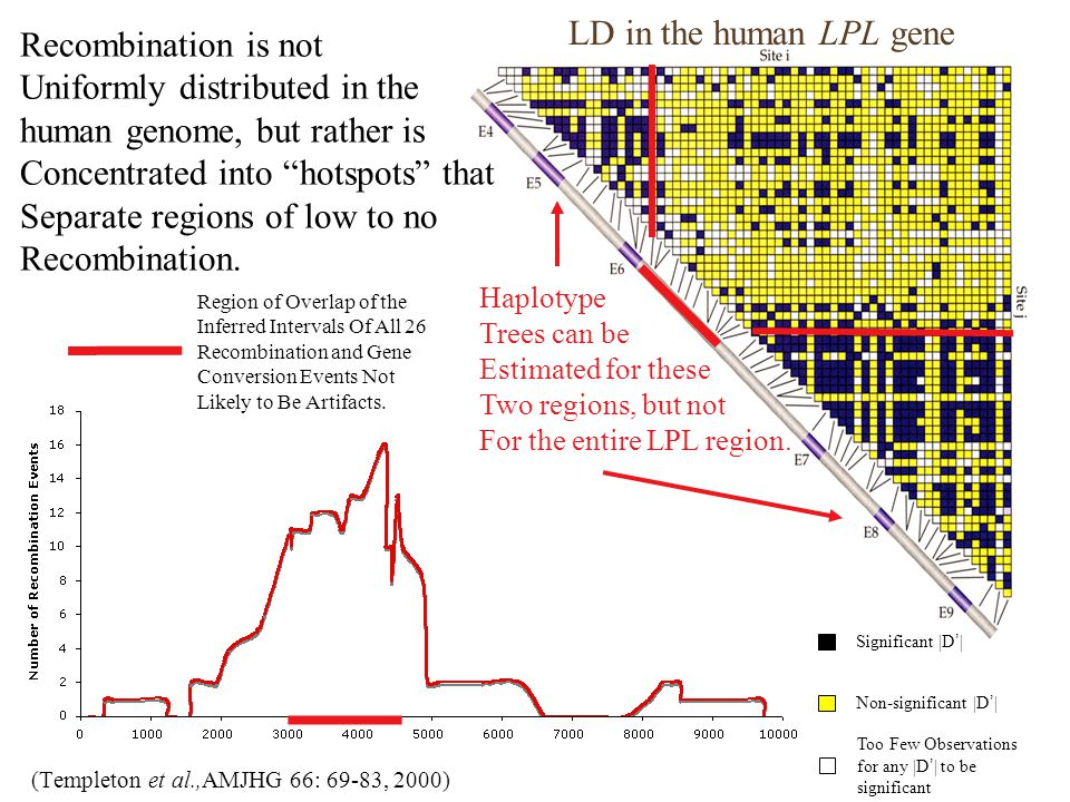 (Templeton et al.,AMJHG 66: 69-83, 2000) Region of Overlap of the Inferred Intervals Of All 26 Recombination and Gene Conversion Events Not Likely to Be Artifacts.