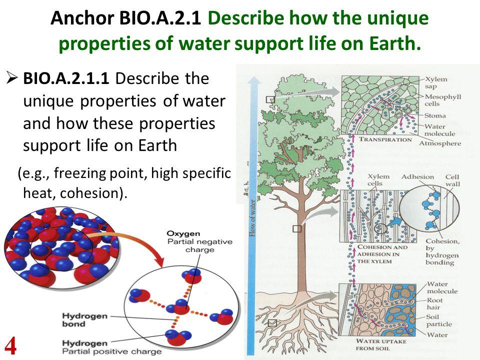 Anchor BIO.A.2.1 Describe how the unique properties of water support life on Earth.  BIO.A.2.1.1 Describe the unique properties of water and how thes