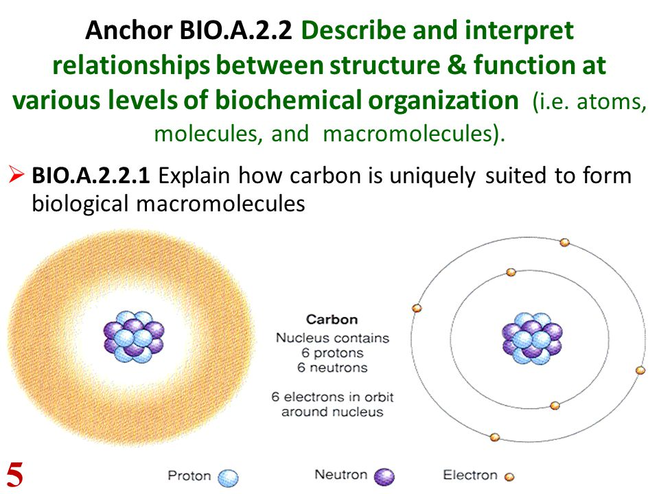 Anchor BIO.A.2.2 Describe and interpret relationships between structure & function at various levels of biochemical organization (i.e. atoms, molecule