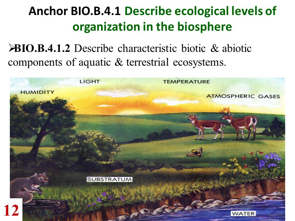 Go to Section: Anchor BIO.B.4.1 Describe ecological levels of organization in the biosphere  BIO.B.4.1.2 Describe characteristic biotic & abiotic com