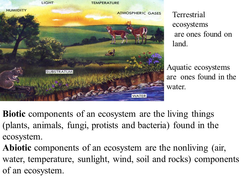 Terrestrial ecosystems are ones found on land. Aquatic ecosystems are ones found in the water. Biotic components of an ecosystem are the living things