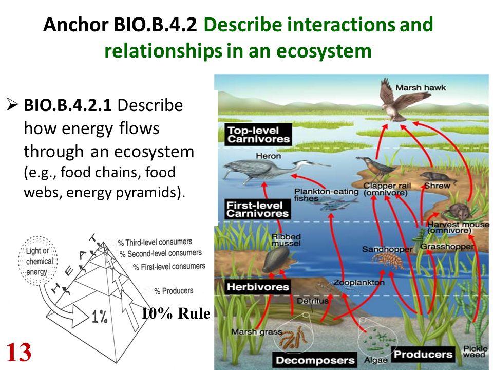 Anchor BIO.B.4.2 Describe interactions and relationships in an ecosystem  BIO.B.4.2.1 Describe how energy flows through an ecosystem (e.g., food chai