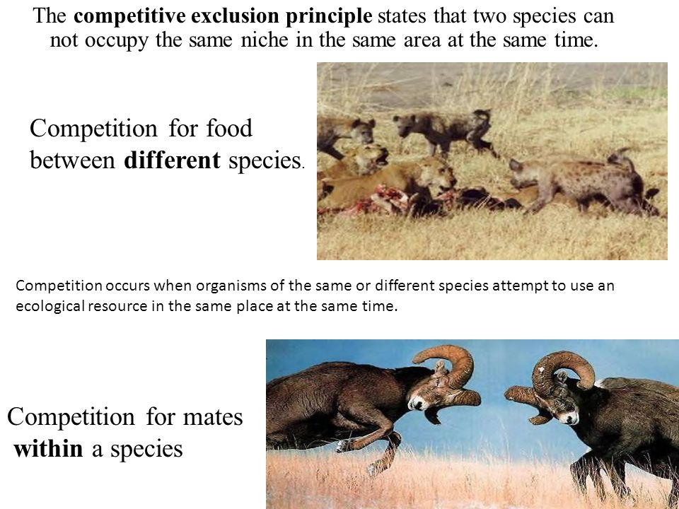 The competitive exclusion principle states that two species can not occupy the same niche in the same area at the same time. Competition occurs when o