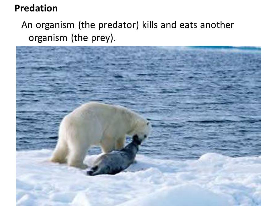 Predation An organism (the predator) kills and eats another organism (the prey).