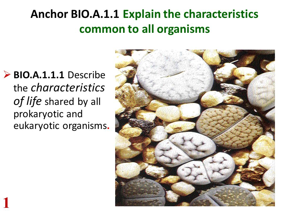 Anchor BIO.A.1.1 Explain the characteristics common to all organisms  BIO.A.1.1.1 Describe the characteristics of life shared by all prokaryotic and