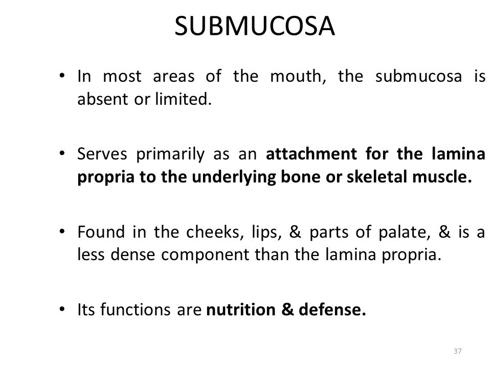 SUBMUCOSA In most areas of the mouth, the submucosa is absent or limited. Serves primarily as an attachment for the lamina propria to the underlying b