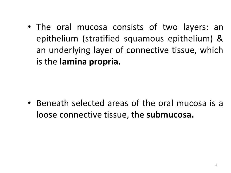 CLASSIFICATION OF ORAL MUCOSA 5