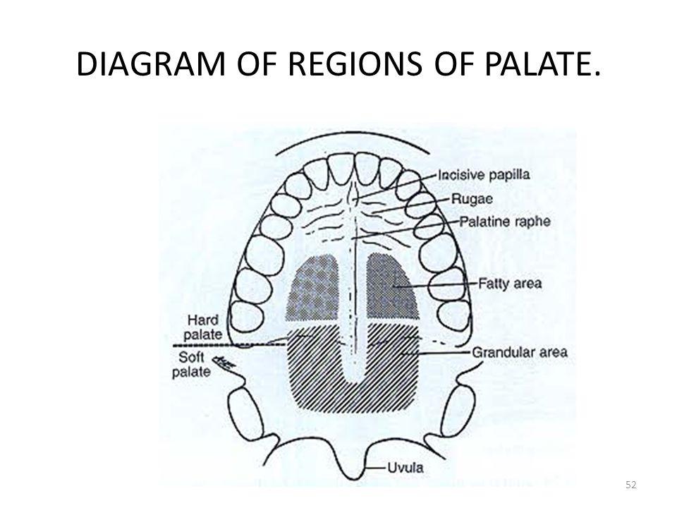 DIAGRAM OF REGIONS OF PALATE. 52