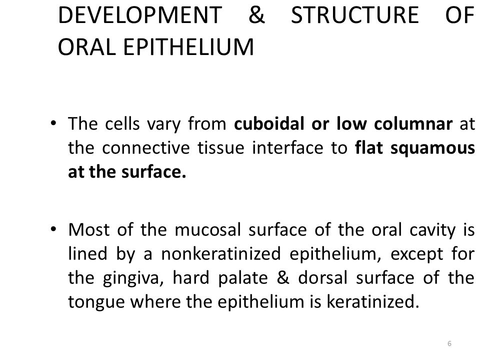 DEVELOPMENT & STRUCTURE OF ORAL EPITHELIUM The cells vary from cuboidal or low columnar at the connective tissue interface to flat squamous at the sur
