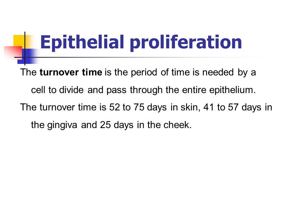Epithelial proliferation The turnover time is the period of time is needed by a cell to divide and pass through the entire epithelium. The turnover ti