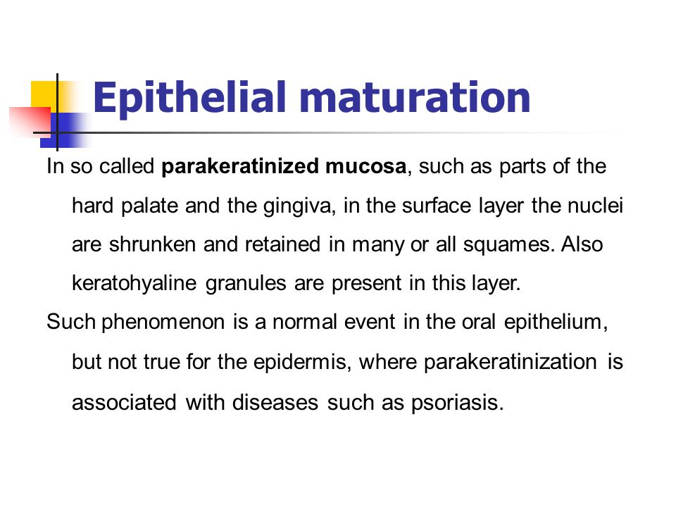 Epithelial maturation In so called parakeratinized mucosa, such as parts of the hard palate and the gingiva, in the surface layer the nuclei are shrun