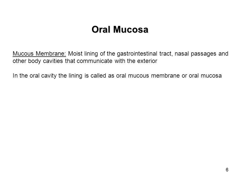 17 Skin Oral Mucosa-Cheek